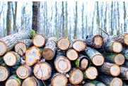 Why Timber ETFs Could Be Stronger This Forest Day